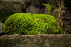 Moss and fern on old bricks stock image