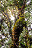 Moss and fern plant coverd on tree trunk at Doi Inthanon National Park in Chiang Mai, Thailand.  stock photography