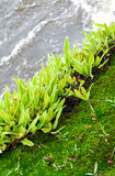 Moss And Fern Stock Photo