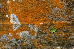 Moss and fern on stone wall Royalty Free Stock Photo