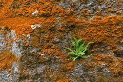 Moss and fern on stone wall Stock Photography