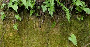 Moss and Ferns Royalty Free Stock Photography