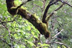 Moss And Ferns On Branches, Tal von Blumen, Uttarkhand, Indien Lizenzfreies Stockfoto