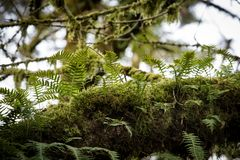 Moss and ferns Stock Image