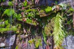Moss and ferns in a fountain Stock Photography