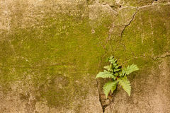 Moss ferns wall Stock Photo