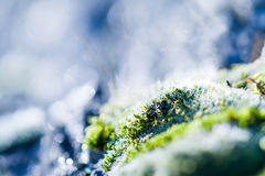 Moss field Royalty Free Stock Image