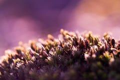 Moss field Stock Photos