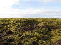A moss field. The result of the eruption of Laki Crater more than 230 years ago Stock Photo
