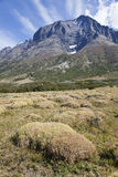 Moss field at Torres del Paine. Chile Royalty Free Stock Images