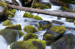 Moss Filled Boulders Fill Stream as Water Rushes By Royalty Free Stock Photography