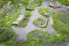 Moss on the floor Royalty Free Stock Images