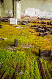 Moss on floor Stock Images