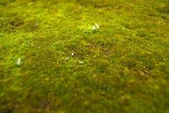 Moss floor Royalty Free Stock Image