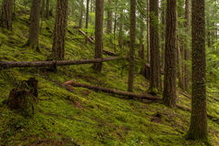 Moss floor in the Rain Forest Stock Images