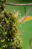 Moss is on the tree. Moss is flora and growth on the tree in deep forest . it has water o spore Stock Photo