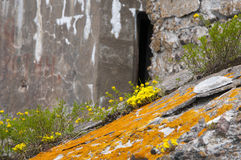 Moss flower. Orange moss and yellow flowers on the cracked concrete surface Stock Images