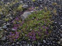 Moss Flowers Lizenzfreie Stockfotografie