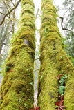 Moss Forest Royalty Free Stock Photos