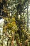 Moss Forest Royaltyfri Bild