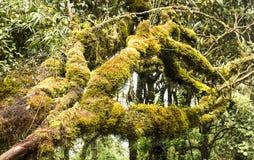 Moss Forest Images libres de droits