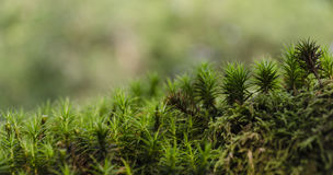 Moss Forest Stock Foto's
