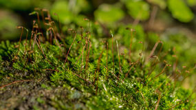 Moss Forest Stock Foto