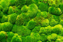 Moss Forest Stock Images