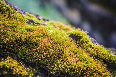 Moss in a forest Royalty Free Stock Photo