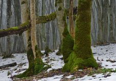 Moss in forest. This is colorful moss in Caucasus forest in winter royalty free stock photo