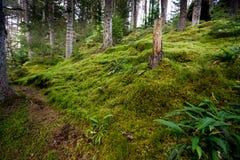 Moss Forest en Escocia Fotos de archivo libres de regalías