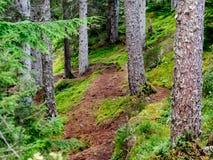 Moss Forest en Escocia con la trayectoria Imagen de archivo