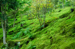Moss on forest floor stock photography