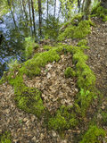 Moss on the forest floor in forest Stock Images
