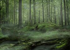Moss Forest with fog royalty free stock photos