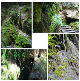 Moss forest Royalty Free Stock Image