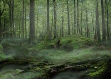 Moss Forest mit Nebel Lizenzfreie Stockfotos
