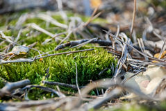 Moss in the forest. In spring Stock Photography