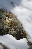 Moss Royalty Free Stock Photography
