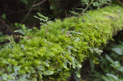 Moss Forest on a Trunk Royalty Free Stock Images