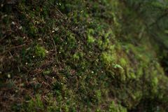 Moss in the forest royalty free stock photography