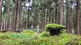 Moss on Forrest floor Royalty Free Stock Photos