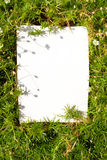 Moss frame Royalty Free Stock Photography