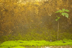Moss in front of the wall Royalty Free Stock Images
