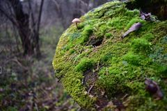 Moss fungus foliage the needles of pine trees adorn an old tree stump in the woods. Autumn forest is beautiful and varied with plant details royalty free stock images