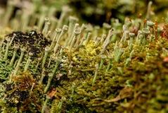Moss fungus macro background slime Stock Photography