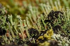 Moss fungus macro background slime Stock Photos