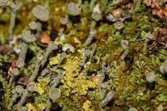 Moss fungus macro background slime Stock Photo
