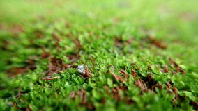 The moss Stock Images