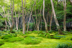 Moss garden view in Arashiyama, Kyoto. Green moss garden with bamboo forest in the background in early Autumn in Arashiyama, Kyoto, Japan Royalty Free Stock Photos